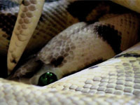 Creepy Snake Photography
